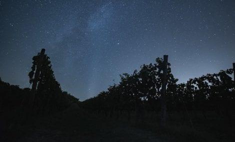 cielo stellato in vigna a Montalcino