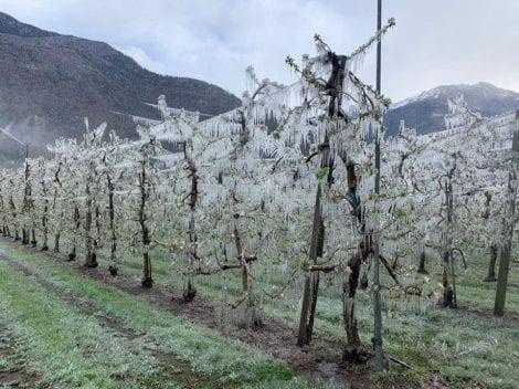 Meleti ghiacciati in Valtellina