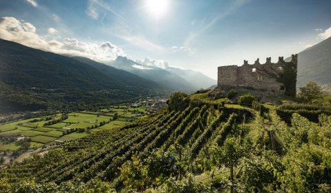 Cantina Nino Negri in Valtellina