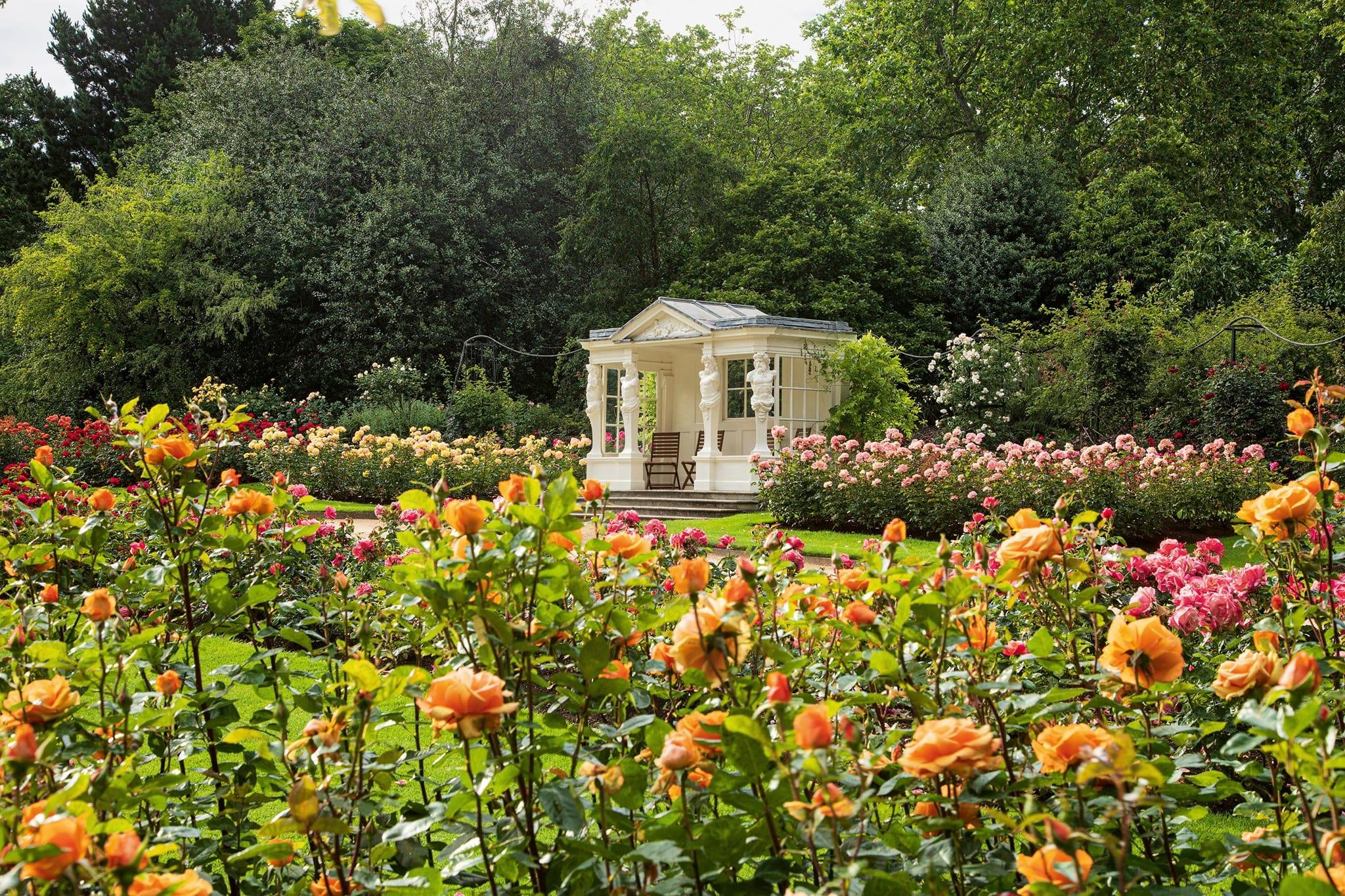 Il roseto di Buckingham Palace