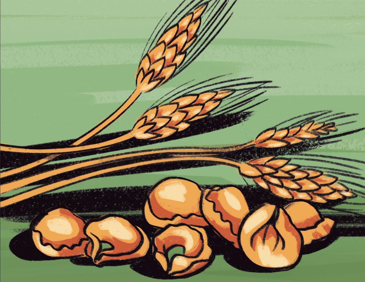 Tortellini e grano. Disegno di Daniela Bracco