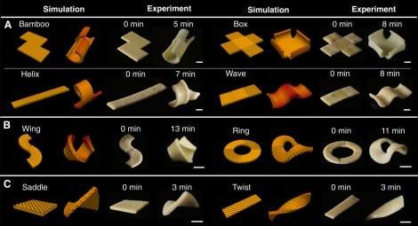 Studio sulla forma della pasta