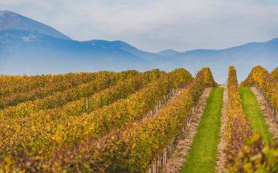 Le vigne di Berlucchi