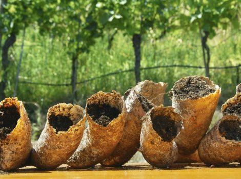 Biodinamica: è davvero stregoneria? Intervista ad Alois Lageder