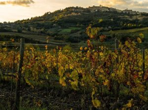 Vigne di Montepulciano