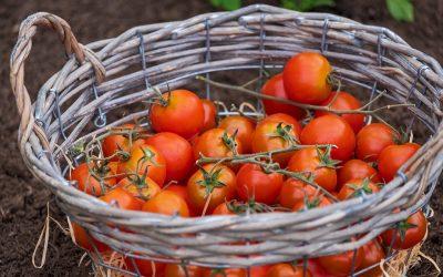 agricoltura bio intensiva