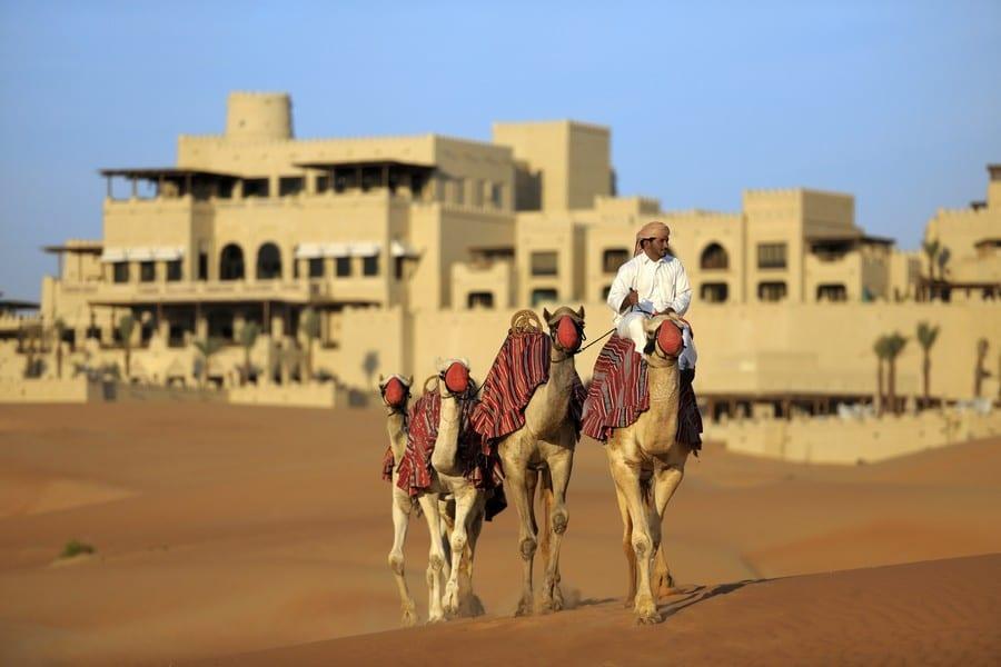 Cammelli in Al Gharbia