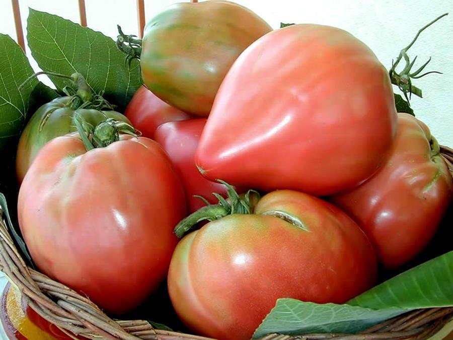 Pomodoro di Belmonte Calabro