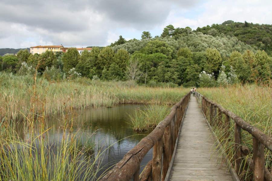 Pontile, Lago di Massaciuccoli, Lucca