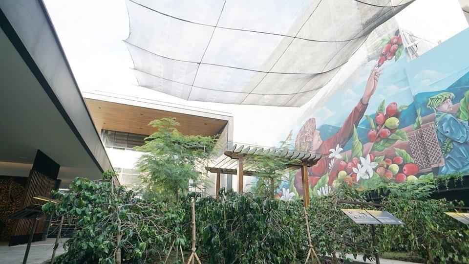 La piantagione di caffè di Satrbucks a Bali