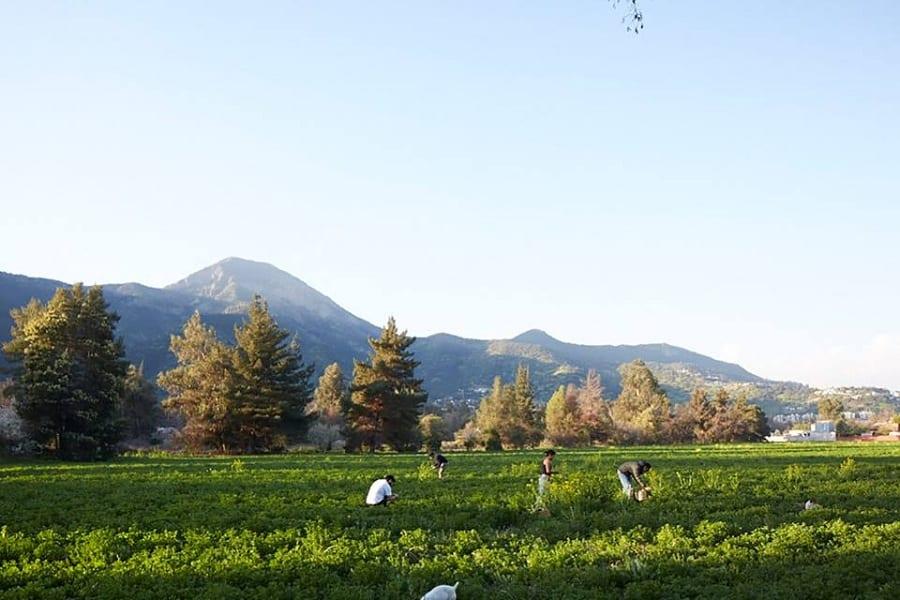 Un campo coltivato in Cile