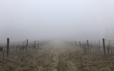 Climate change: come cambia la viticoltura con il surriscaldamento terrestre