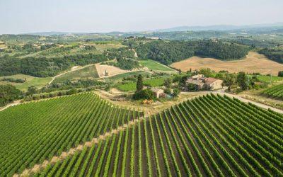 le vigne del Chianti