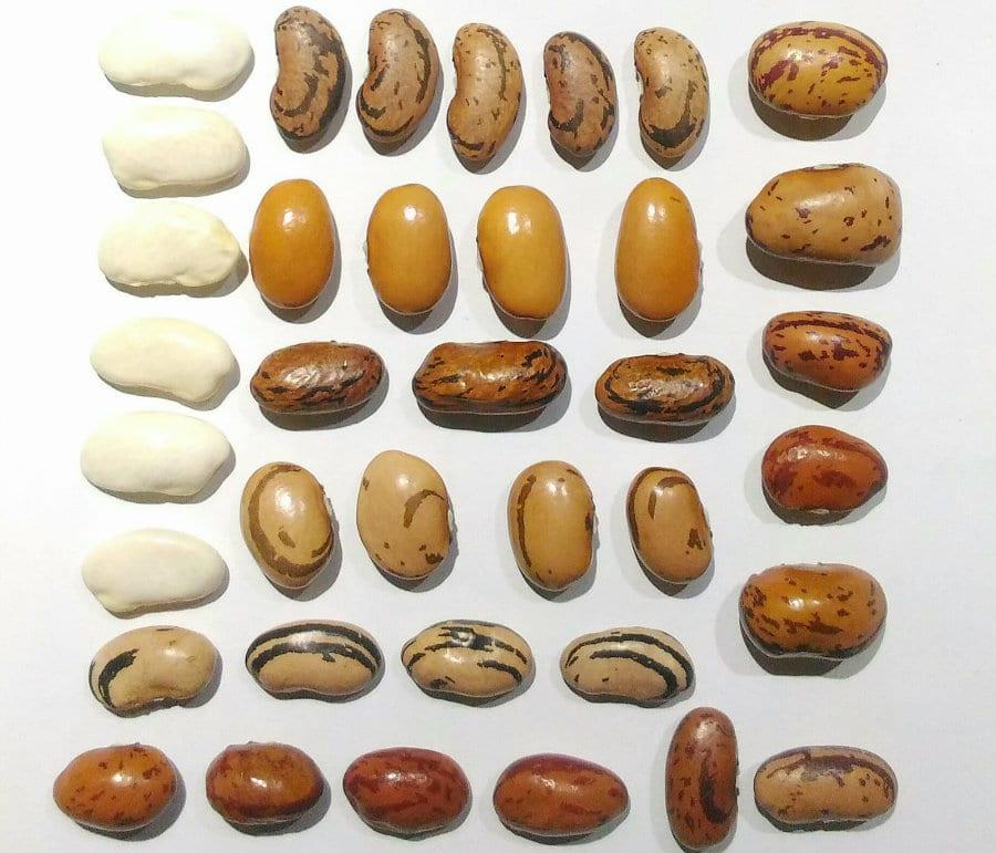 Collezione di fagioli di Max Nunziata