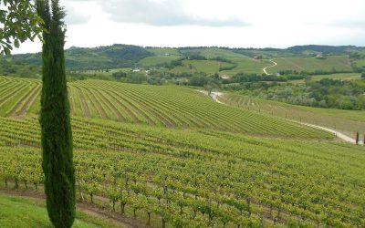 Panorama del COllio