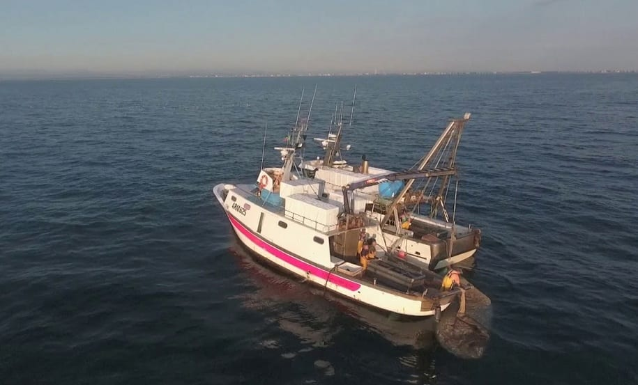 La Motopesca Sirio in mare