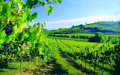L'Emilia-Romagna investe su progetti innovativi orientati alla sostenibilità