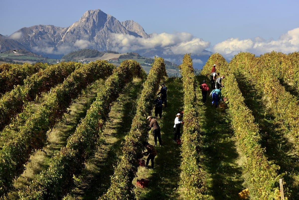 App Percorsi del Consorzio Tutela Vini d'Abruzzo