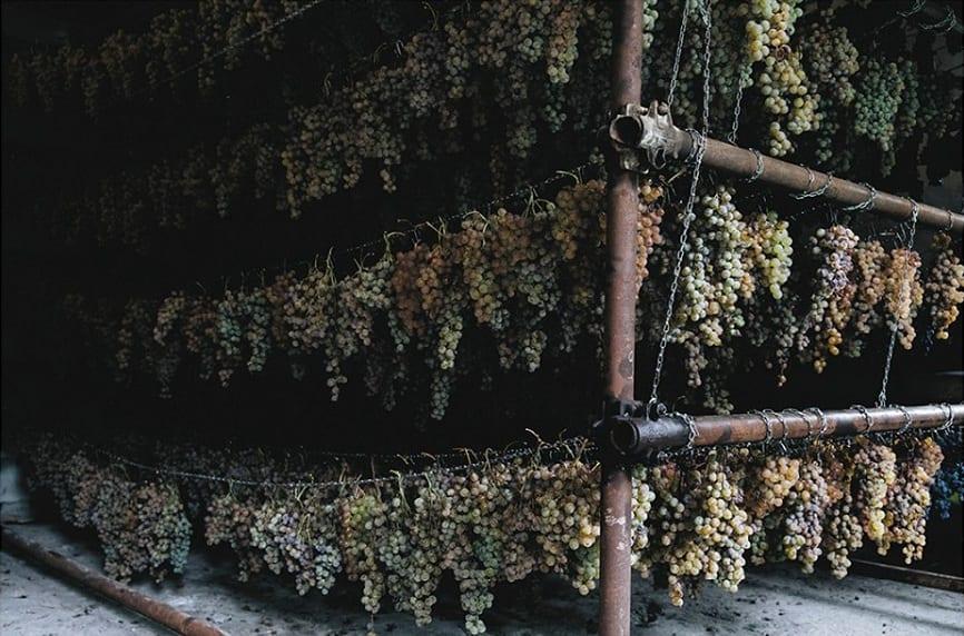 Uva bianca appesa a essiccare