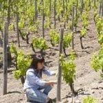 114116 La giovane produttrice Elena Fucci tra le vigne di aglianico del Vulture a Barile Pz