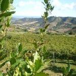 le Caniette-vigne e territorio