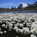 lago rosset_eriofori al colle del nivolet e vista sul massiccio del gran paradiso_ 03418_100_0013