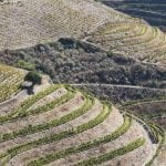 211220 Paesaggio vinicolo in alto Douro