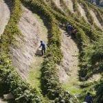 279 27678 Vigne nel Douro paesaggio protetto dallUnesco