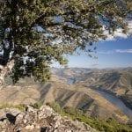 307 307311 Il fiume Douro attraversa la regione vinicola