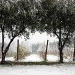 69_tenuta-maddalena-territorio-4