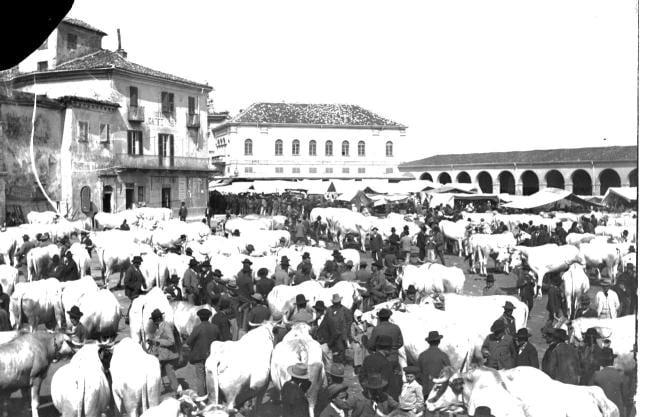 La Fiera del Bue Grasso a Carrù  bovini f0b3bca5677d