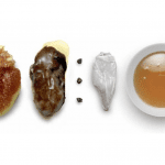 cracco-Ostrica cotta al sale fichi e burro alla salvia-cracco