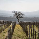 panorama_vigne_1