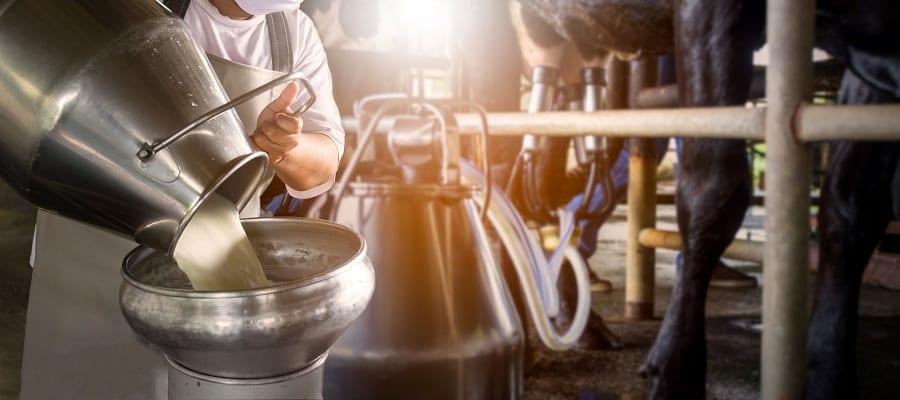 Industria alimentare: dentro una stalla per la produzione di latte