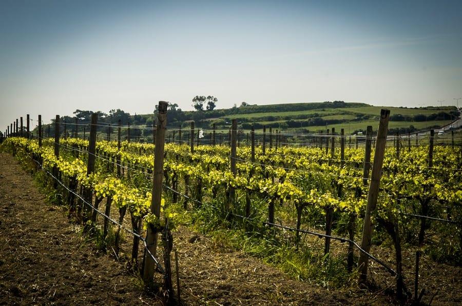 Le vigne a Malta