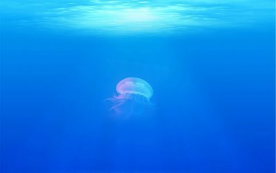 Technology advancements can treat and conserve barrel jellies as food