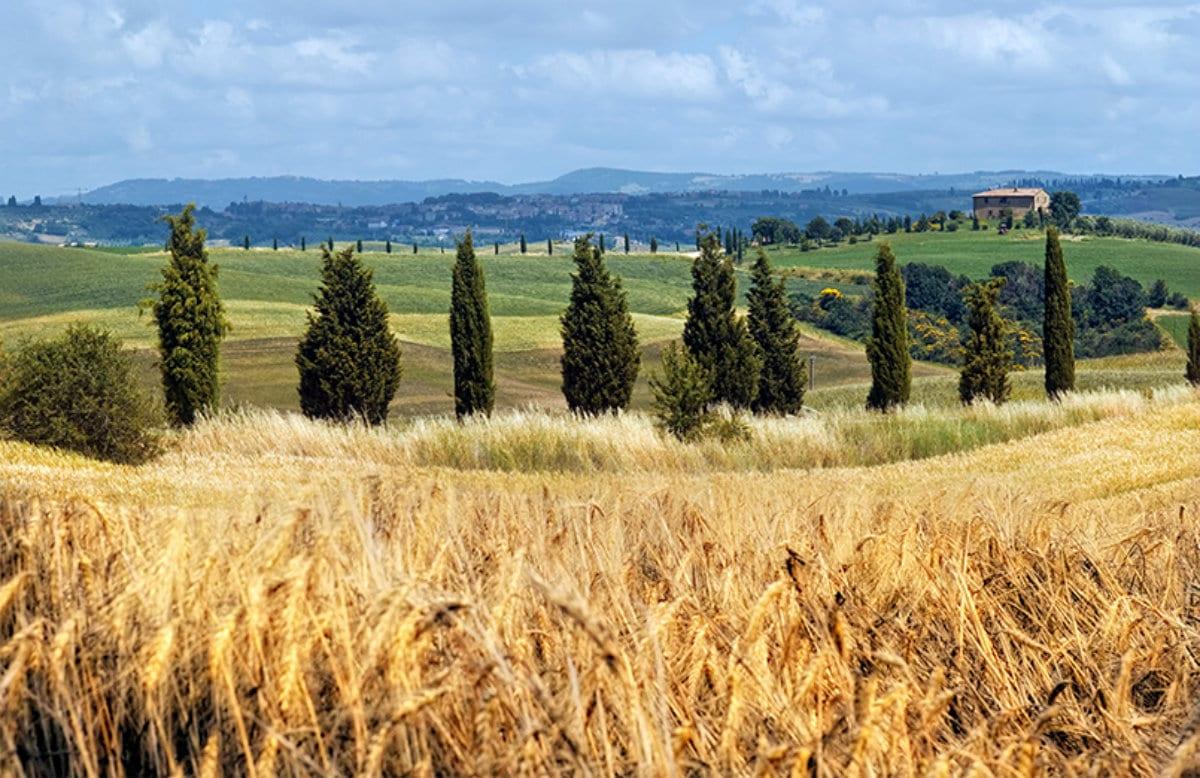 menchetti-azienda-agricola Menchetti dal 1948. Storia, numeri e progetti futuri dei panifici che hanno conquistato la Toscana