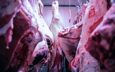 Pezzi di carne appesa. Foto di Paolo Della Corte