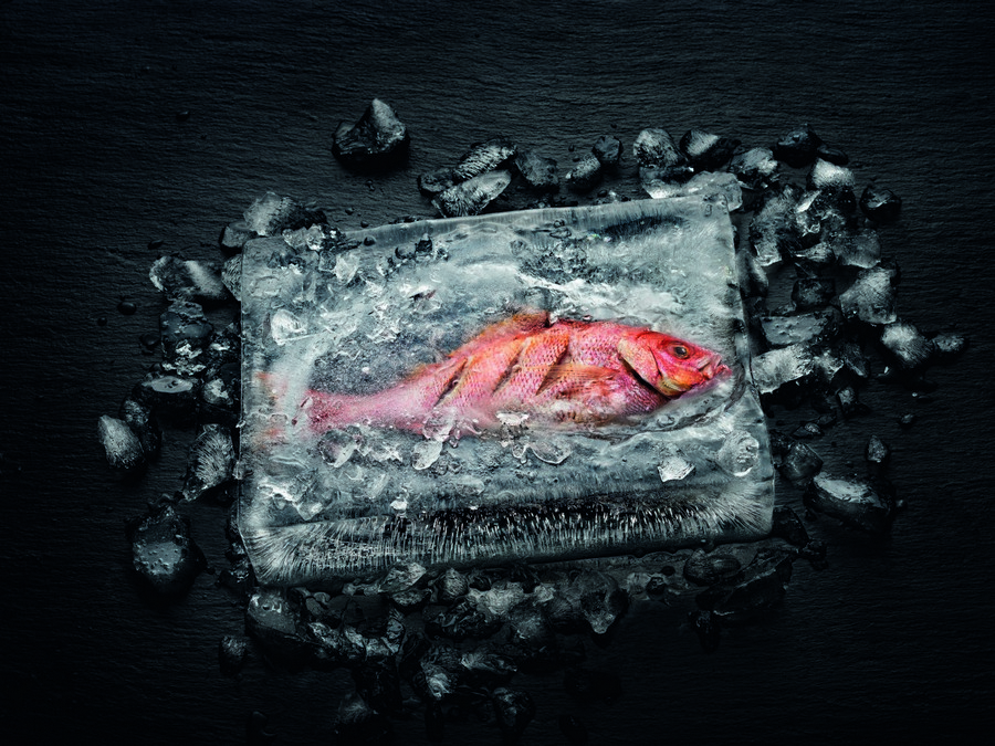 Pesce cotto in cubo di ghiaccio con il forno Dialog oven