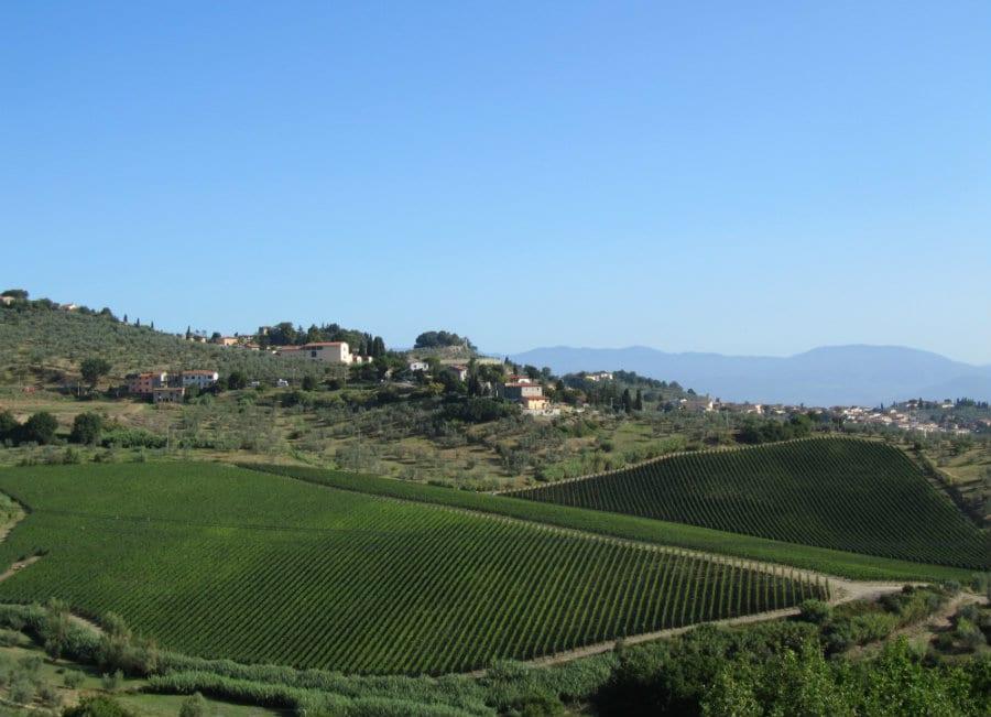 Azienda Piaggia, le colline