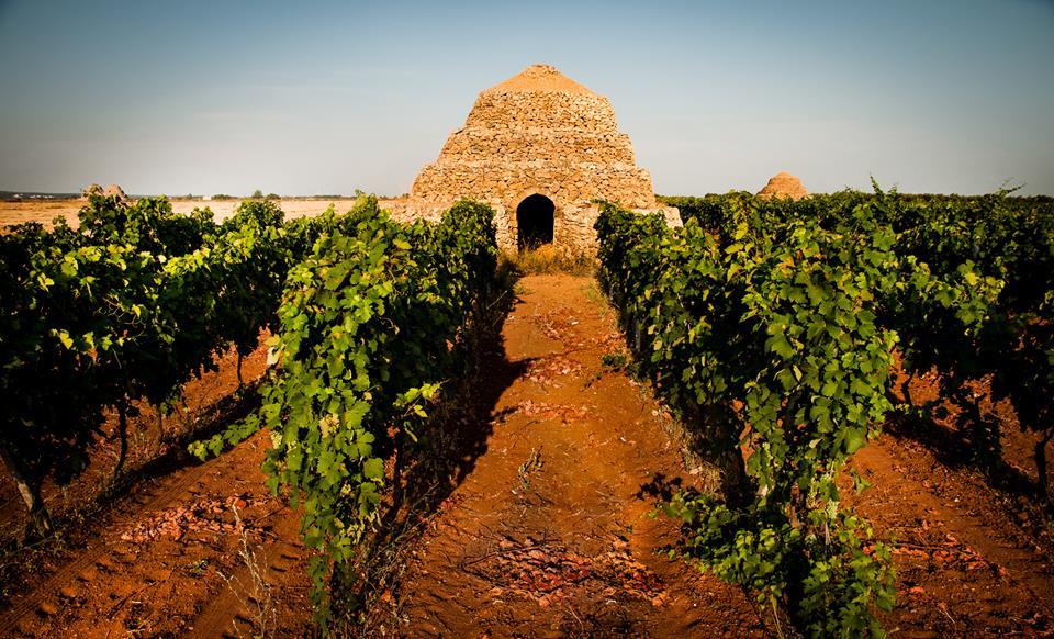 Le vigne del Primitivo a Manduria