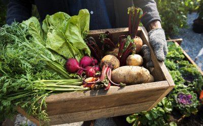 Una cassetta di legno con i prodotti della campagna, patate, ravanelli e rape, tenuta da un contadino