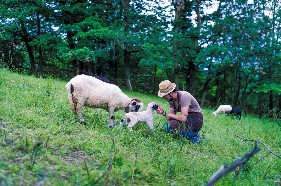 Juri Rocchi gioca con una piccola pecora sul prato del Reis