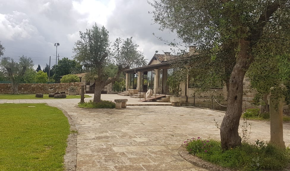 Il giardino di Roots, con le piante di ulivo