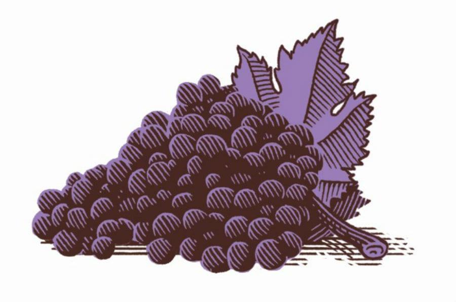 Grappolo d'uva. disegno di Marcello Crescenzi