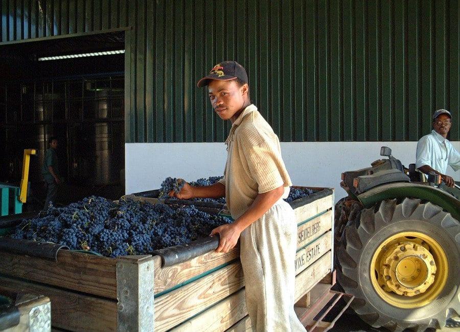 Lavorazione del vino in Sudafrica